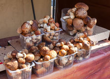 Raw edible mushrooms ready for sale Royalty Free Stock Photography