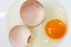 Raw egg Royalty Free Stock Photos