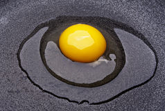 Raw Egg Stock Image