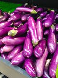 Raw of eggplant Stock Images