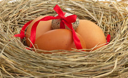Raw eggs Stock Photos