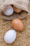 Raw eggs in burlap sack on rice husk background Royalty Free Stock Image