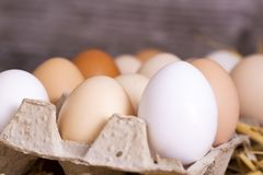 Raw eggs in dry straw. Food concept photo.  royalty free stock images