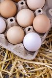 Raw eggs in dry straw. Food concept photo.  stock photography