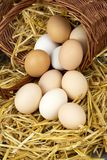 Raw eggs in dry straw. Food concept photo.  royalty free stock image