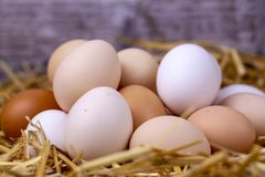 Raw eggs in dry straw. Food concept photo.  stock images