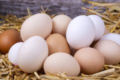 Raw eggs in dry straw. Food concept photo.  royalty free stock photography