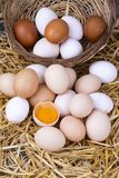 Raw eggs in dry straw. Food concept photo.  royalty free stock photo
