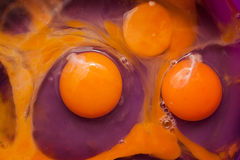 Raw eggs. Eggs in a purple bowl ready for mixing Stock Images