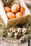 Raw eggs Stock Image