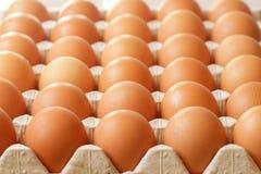 Raw eggs in tray Royalty Free Stock Photos