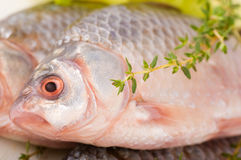 Raw European carp with a thyme Royalty Free Stock Photo