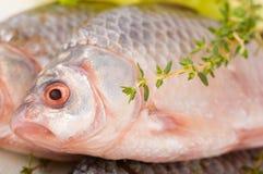 Raw European carp with a thyme Royalty Free Stock Photo