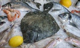 Raw european seabass, shrimps lie on ice. Closeup Stock Images