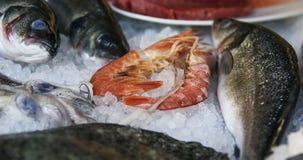 Raw european seabass, shrimps lie on ice. Closeup Royalty Free Stock Photos