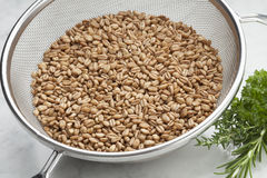 Raw Farro grains Stock Photography