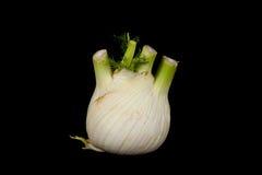 Raw fennel Stock Photos