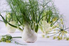 Raw fennel bulbs with green stems and leaves, fennel flowers ready to cook. On  white background Royalty Free Stock Photos