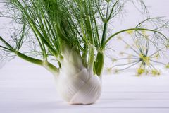 Raw fennel bulbs with green stems and leaves, fennel flowers and root ready to cook. On  white background Royalty Free Stock Image