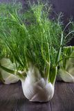 Raw fennel bulbs with green stems and leaves, fennel flowers and root ready to cook. On  dark background Stock Image