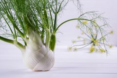 Raw fennel bulbs with green stems and leaves, fennel flowers and root ready to cook. On  white background Royalty Free Stock Images