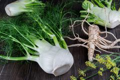 Raw fennel bulbs with green stems and leaves, fennel flowers and root ready to cook. On  dark wooden background Royalty Free Stock Photography