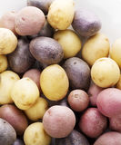 Raw Fingerling potatoes Stock Photography