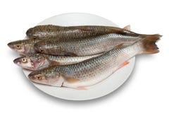 Raw fish. Raw  fish, isolated on white background Stock Photography