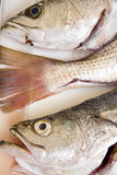 Raw fish 2 stock images