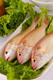 Raw fish. Fresh raw fish prepare for cooking Stock Image