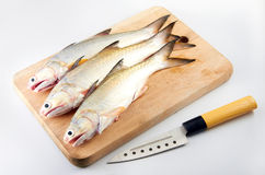 Raw Fish. On clean background royalty free stock photos
