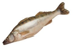 Raw  fish. Straight fish against white background Royalty Free Stock Photo