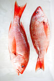 Raw fish Royalty Free Stock Photo