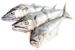 Raw fish Royalty Free Stock Photography
