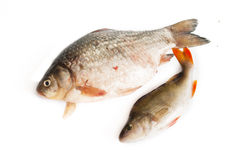 Raw fish. In white backgriund Royalty Free Stock Photography