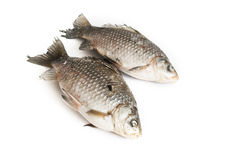 Raw fish. In white backgriund Stock Photos