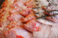Raw fish Stock Image