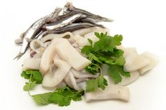Raw fish. Squid and anchovies surrounded by white background Stock Image