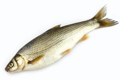 Raw fish Royalty Free Stock Photos