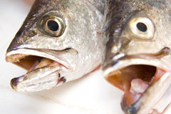Raw fish 5 Royalty Free Stock Photo