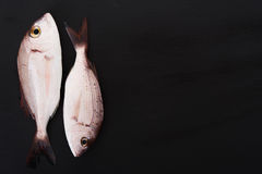 Raw fish on black board. Raw fish Pagellus on black stone board with empty space Stock Image