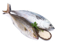 Raw fish, Bonito and Yellowtail, isolated on white Royalty Free Stock Image