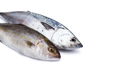Raw fish, Bonito and Yellowtail, isolated on white Stock Photos