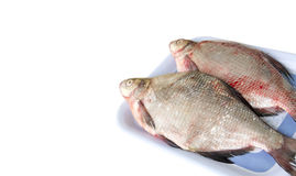 The raw fish bream Royalty Free Stock Images
