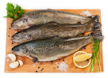 Raw fish (brown trout) Stock Images