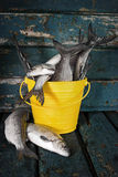 Raw fish in a bucket Stock Photo