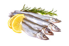 Raw fish capelin and a branch of rosemary, lemon slices isolated on white background Stock Photos
