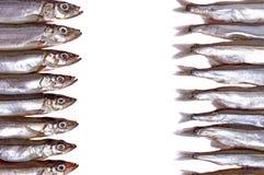 Raw fish capelin: left - head, right - tails. Stock Photos