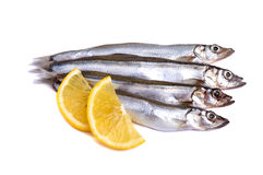 Raw fish capelin with lemon slices isolated Royalty Free Stock Images