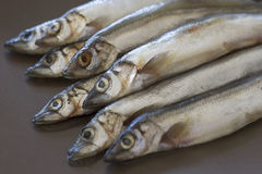 Raw fish capelin on the table Stock Images